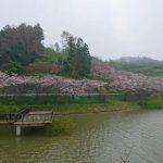 新長尾橋渡った先からの眺め